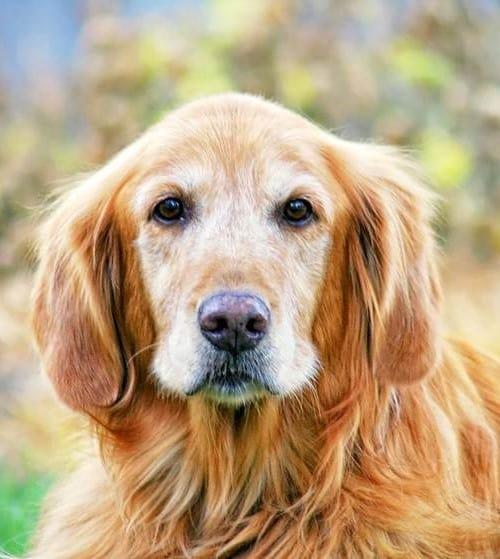 Эхо сердца для собак адрес